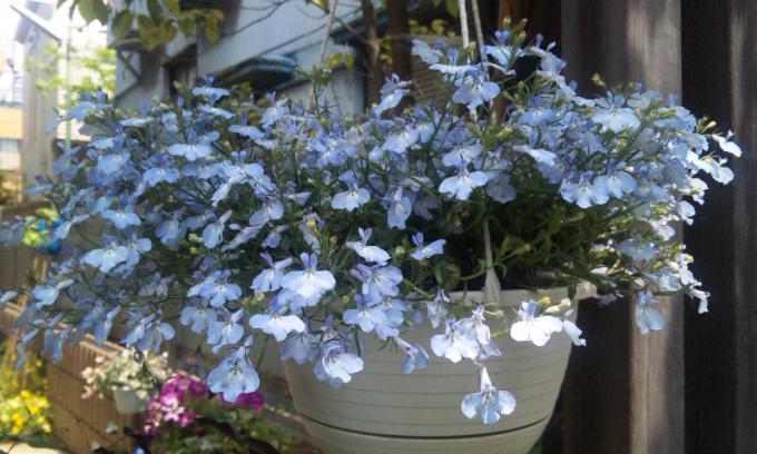FLOWER_20130429