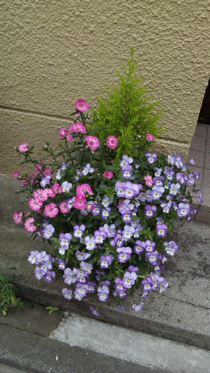 FLOWER_20130430