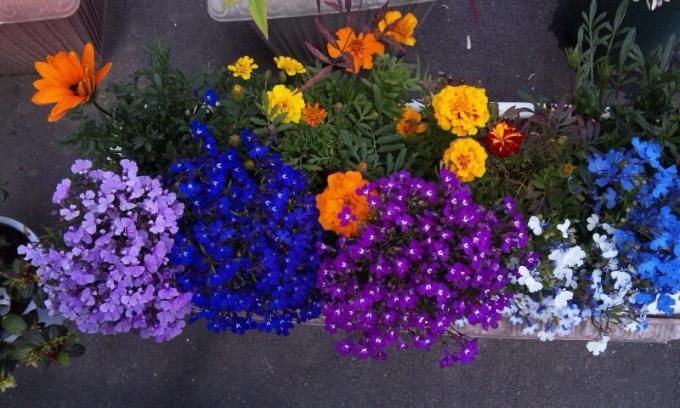 FLOWER_20130502