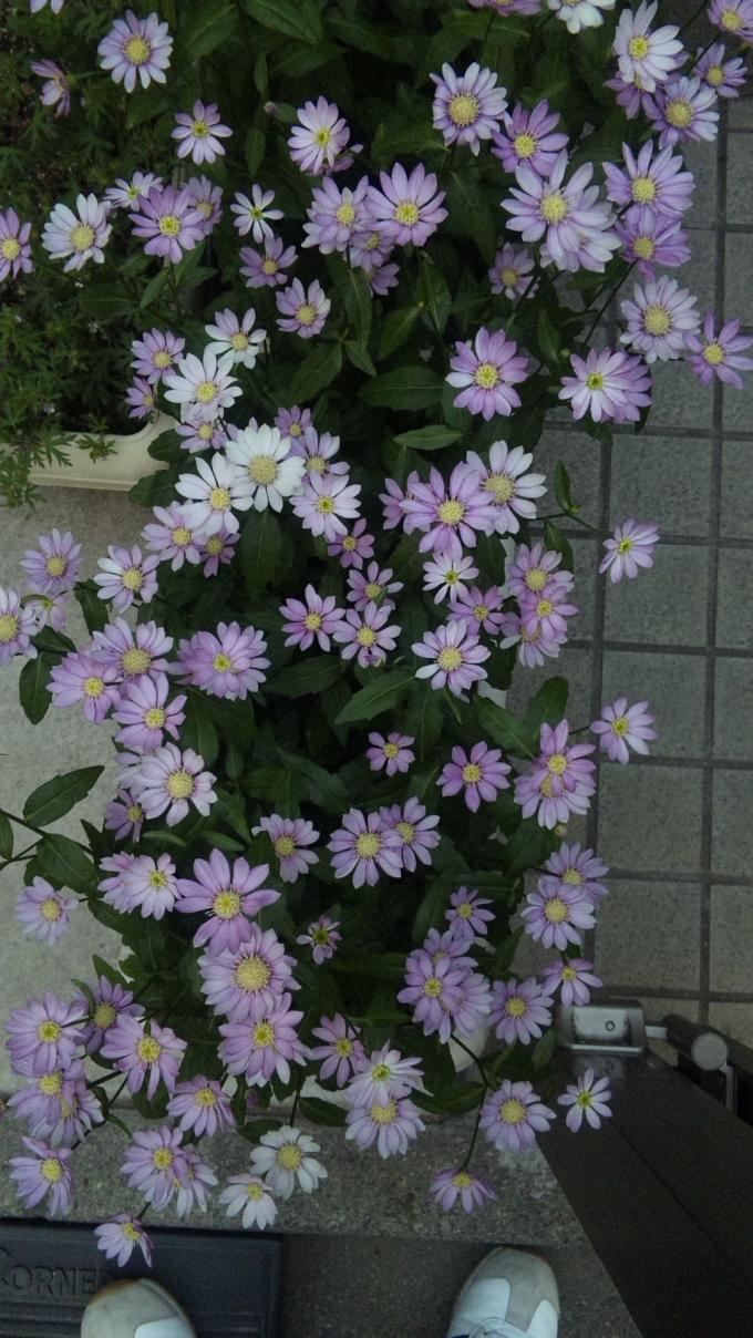 FLOWER_20130504