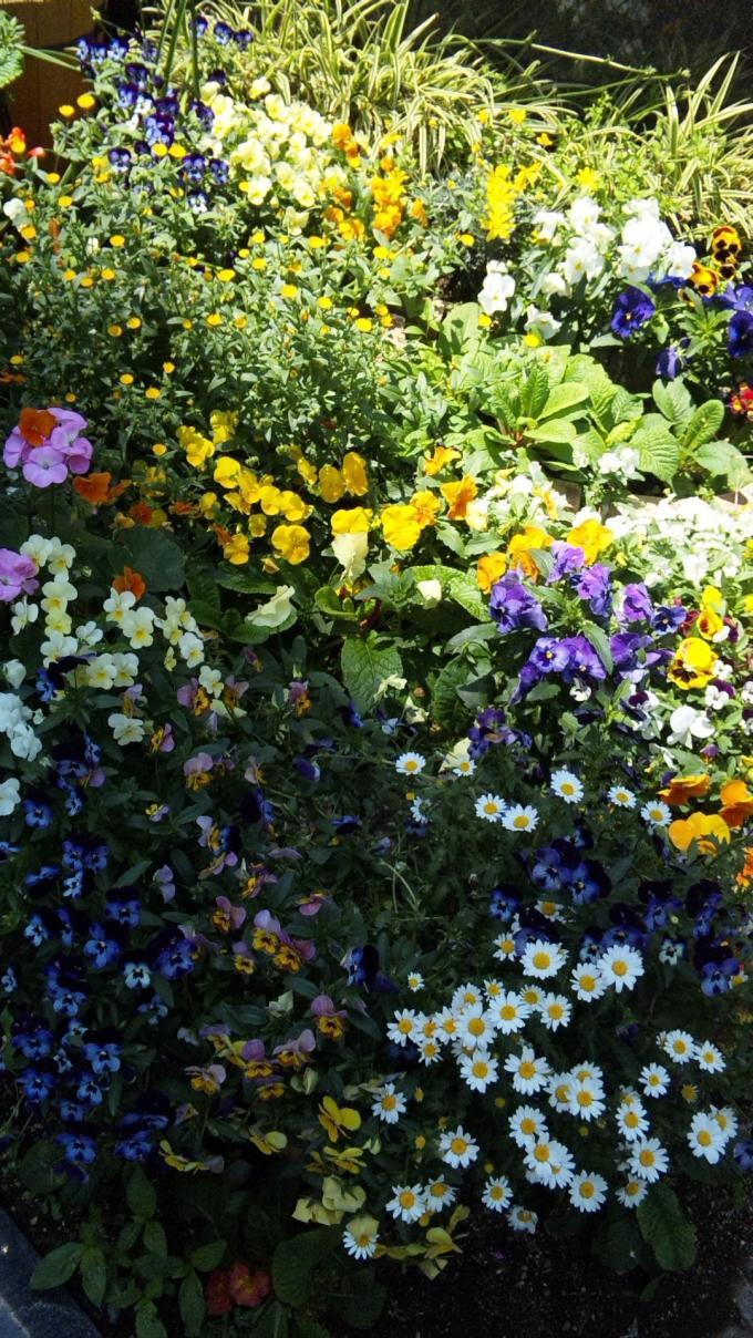 FLOWER_20130505