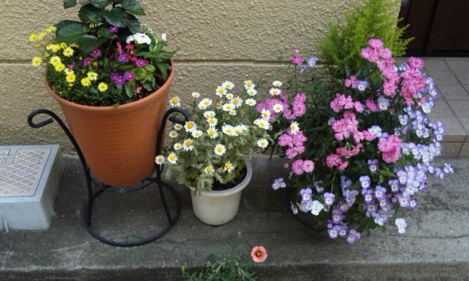 FLOWER_20130508