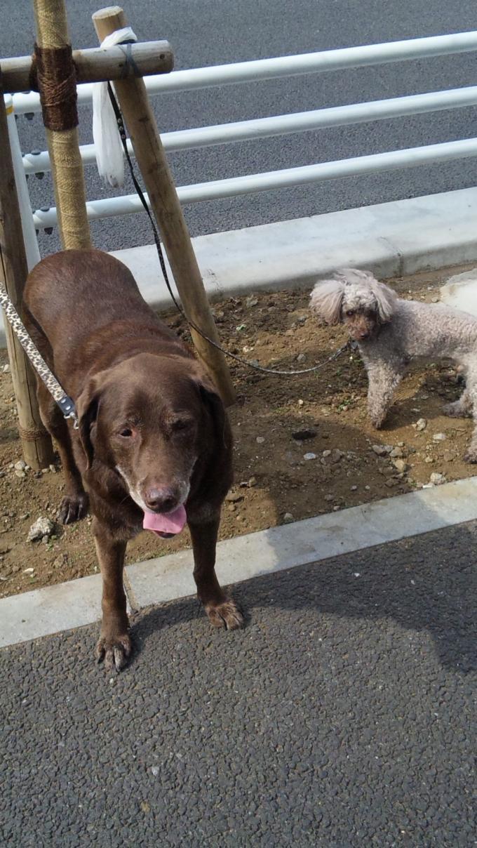 DOG_20130510