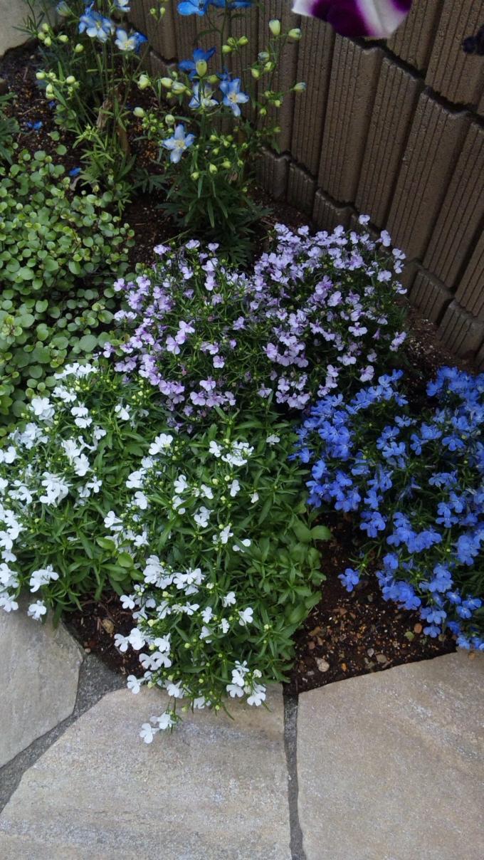 FLOWER_20130510