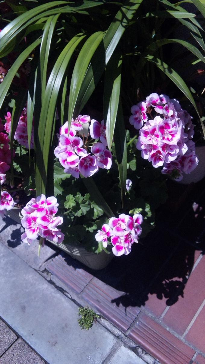 FLOWER_20130512