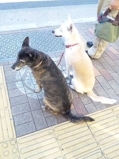 DOG_20130513
