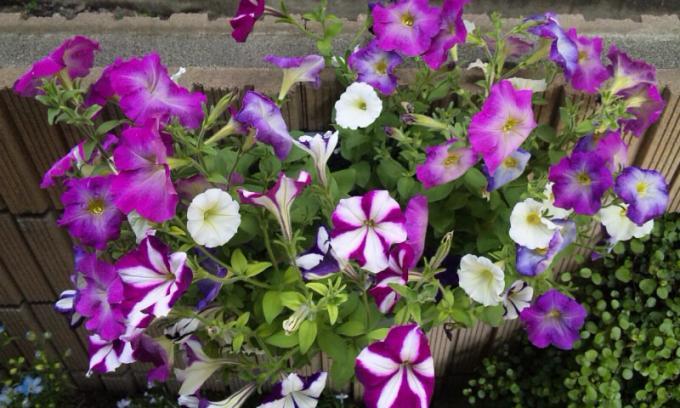 FLOWER_20130513