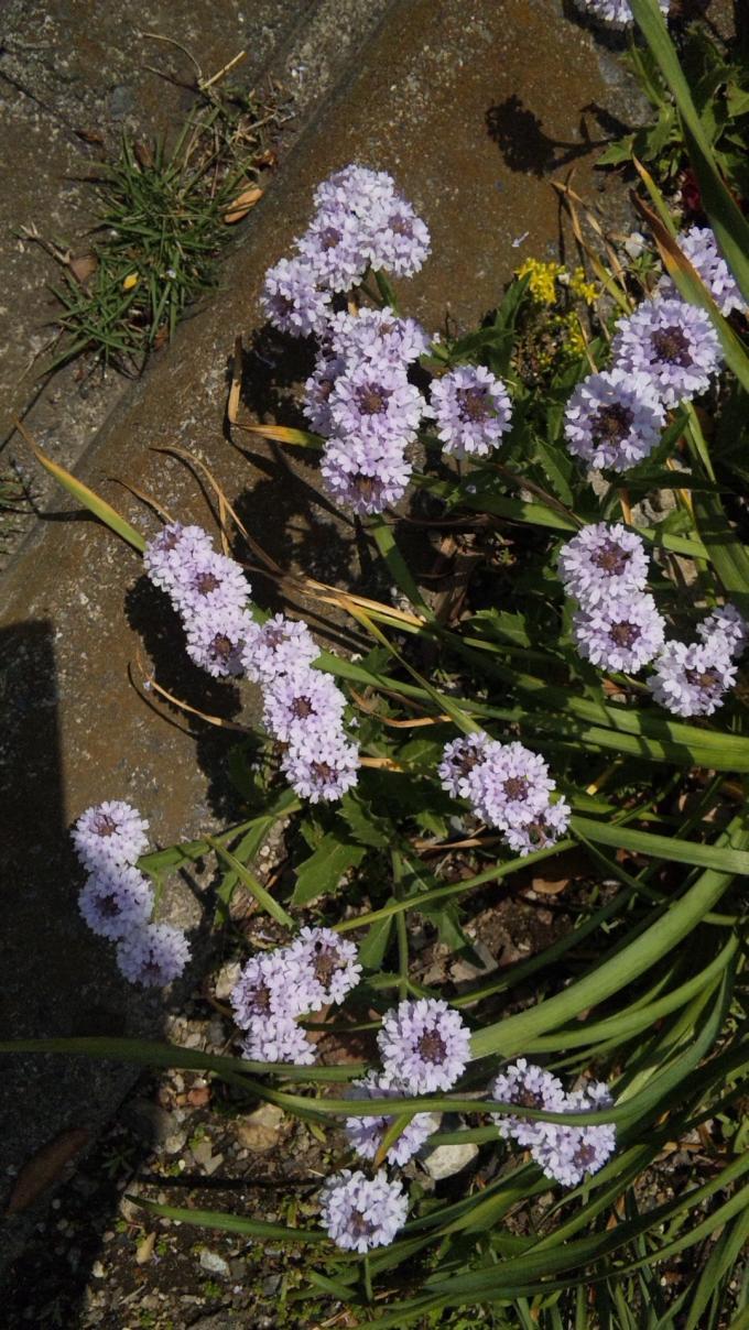 FLOWER_20130514
