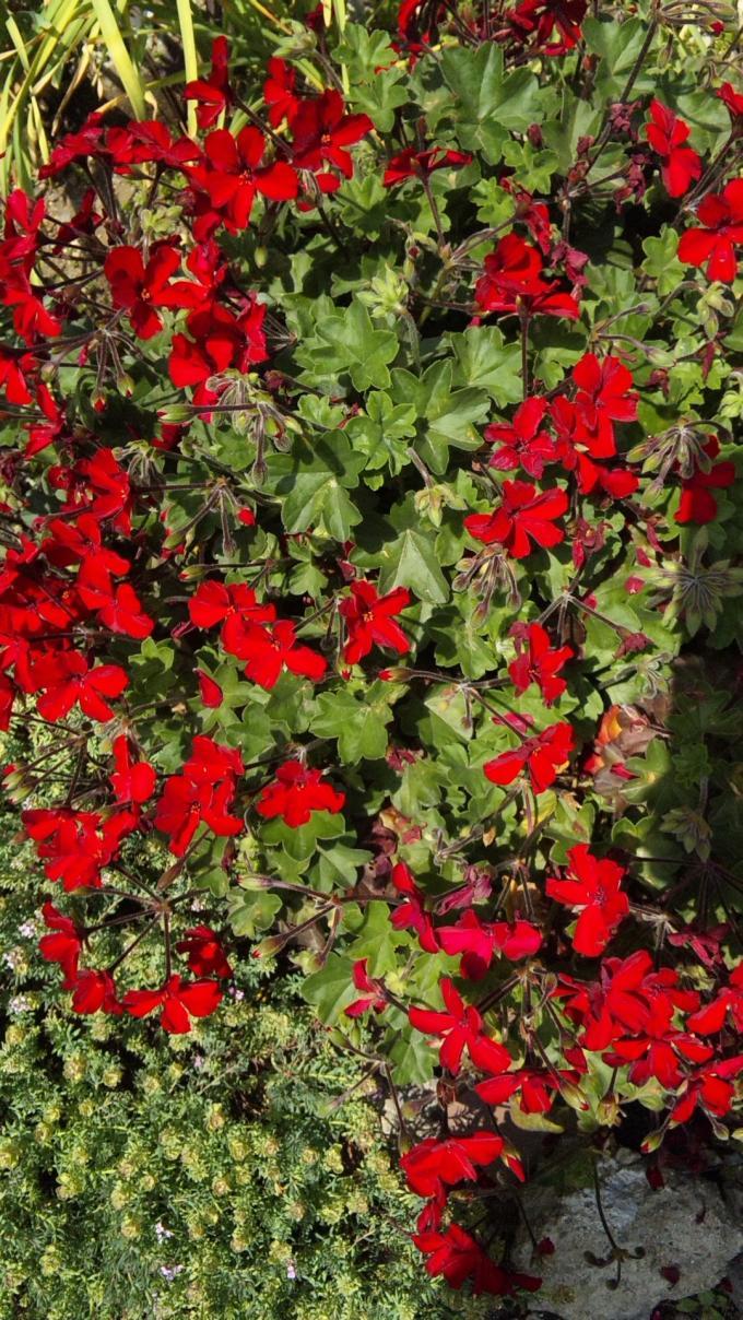 FLOWER_20130515