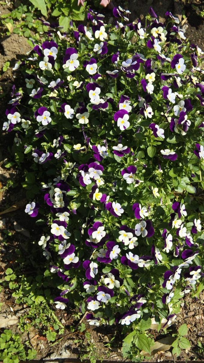 FLOWER_20130517