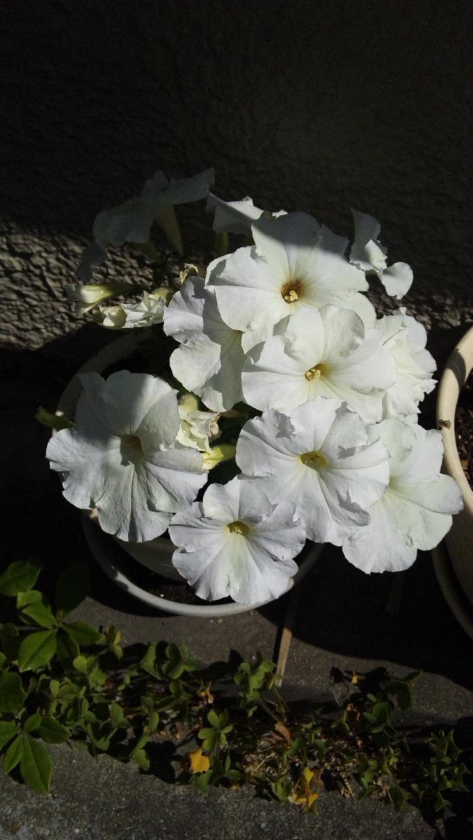 FLOWER_20130518