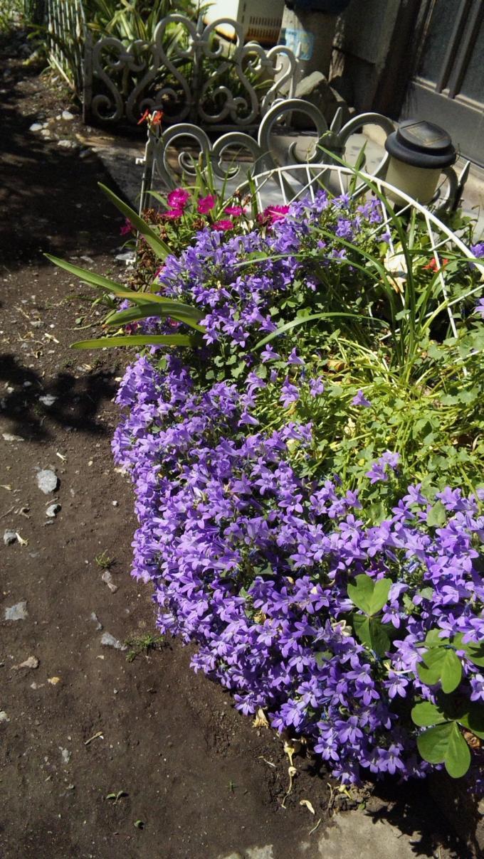 FLOWER_20130519