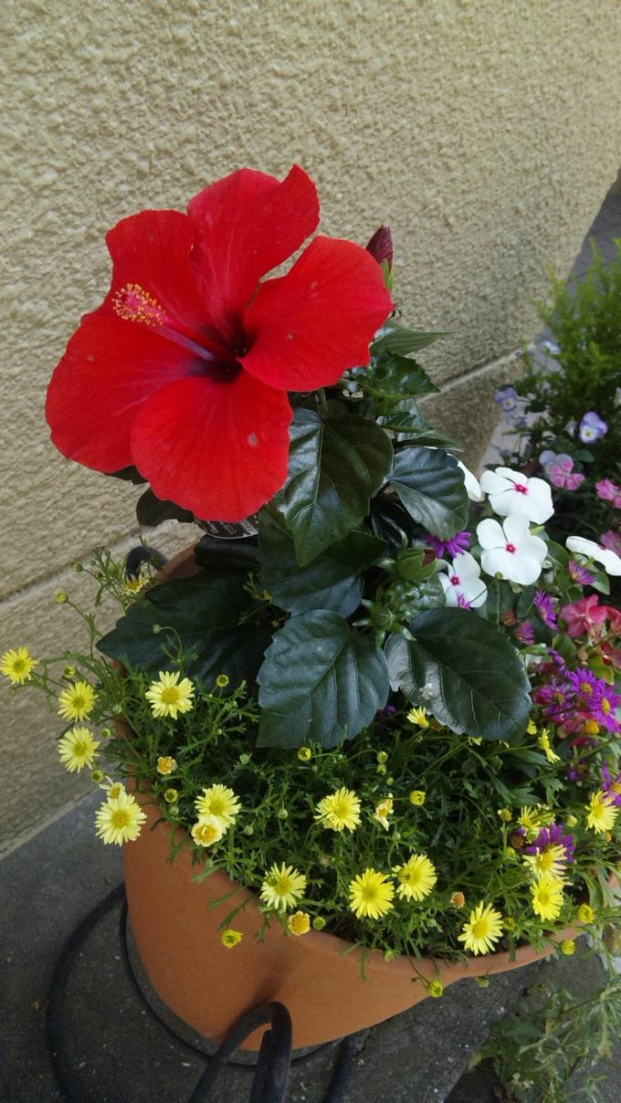 FLOWER_20130520