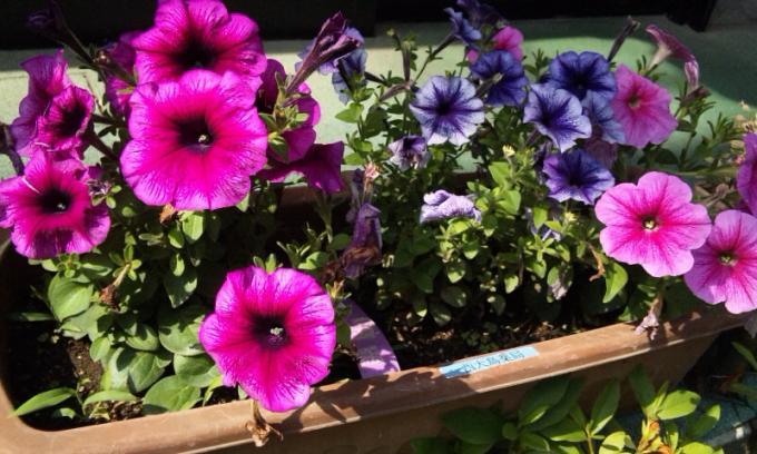 FLOWER_20130522