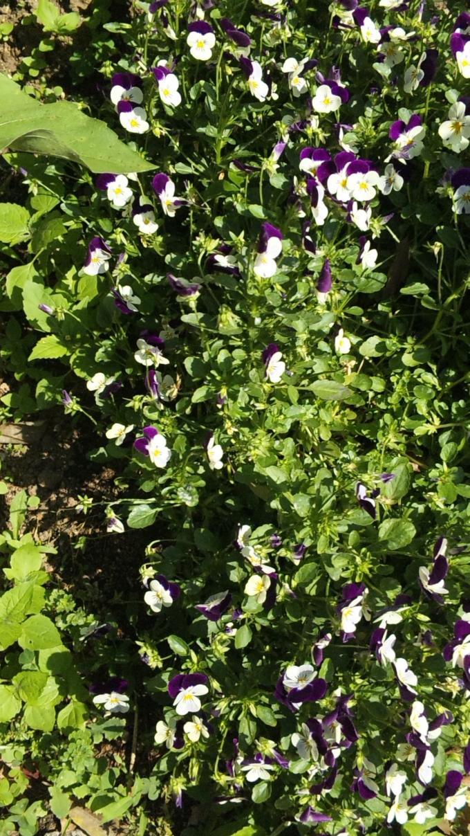 FLOWER_20130523