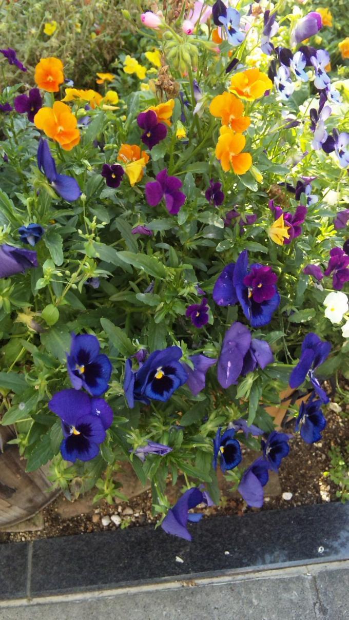 FLOWER_20130524