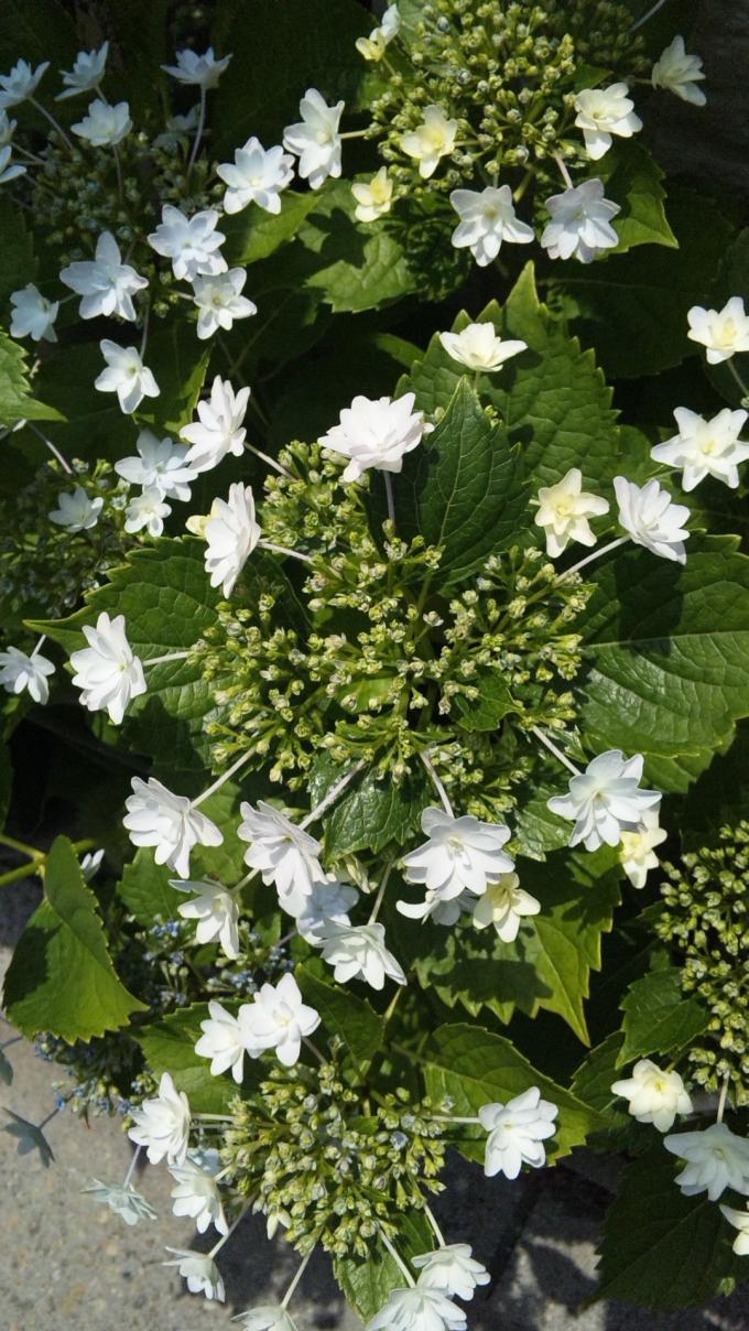 FLOWER_20130527