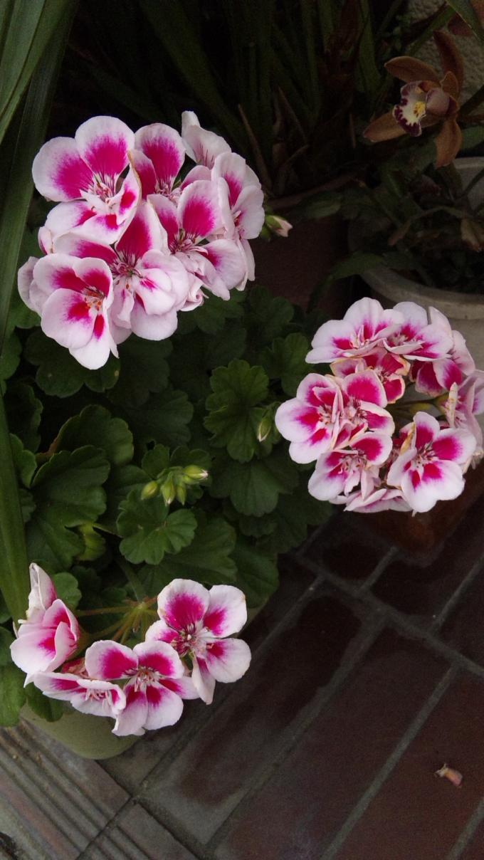 FLOWER_20130528