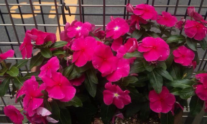 FLOWER_20130530