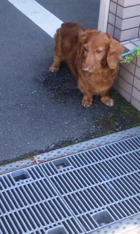 DOG_20130531