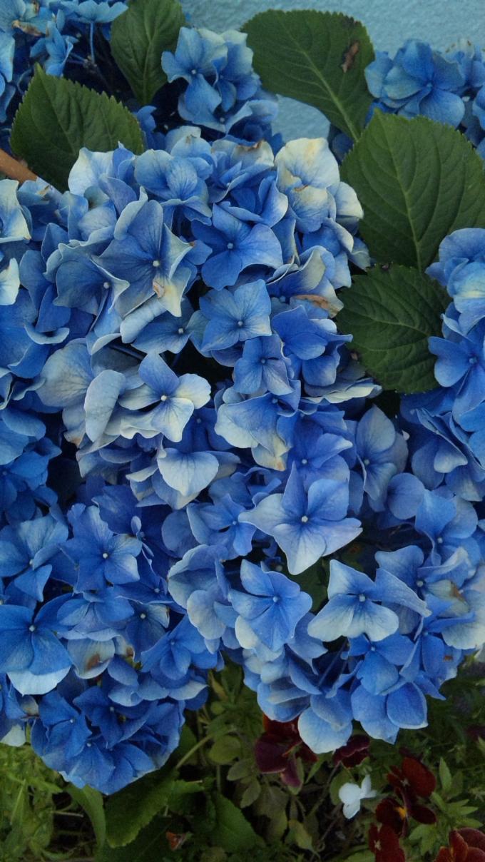 FLOWER_20130531