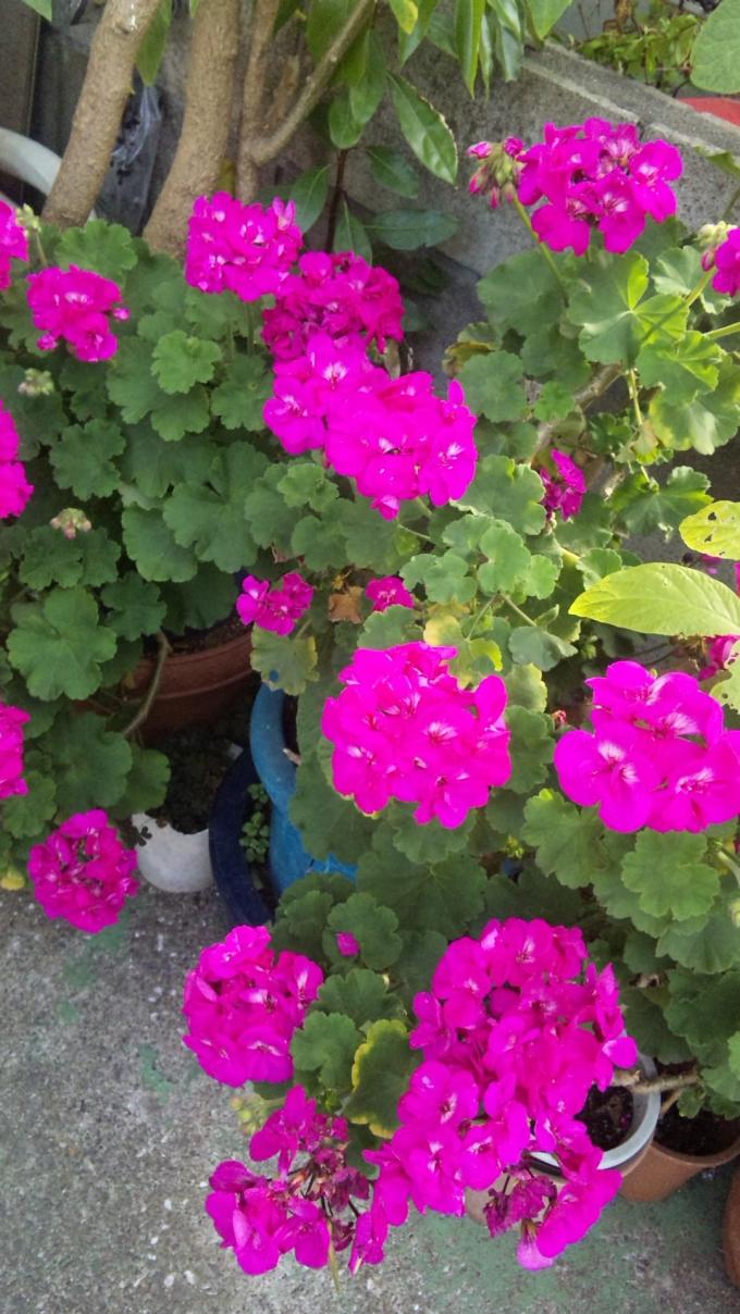 FLOWER_20130601