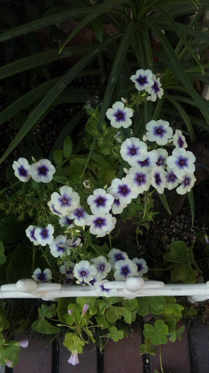 FLOWER_20130604