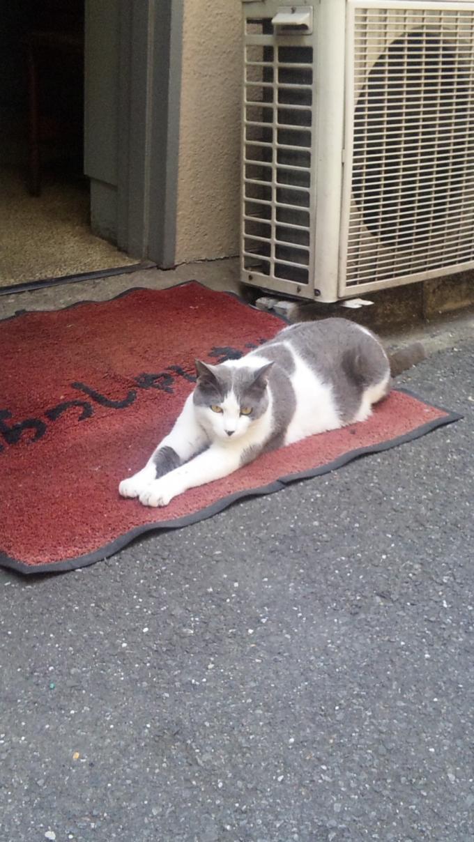 CAT_20130605