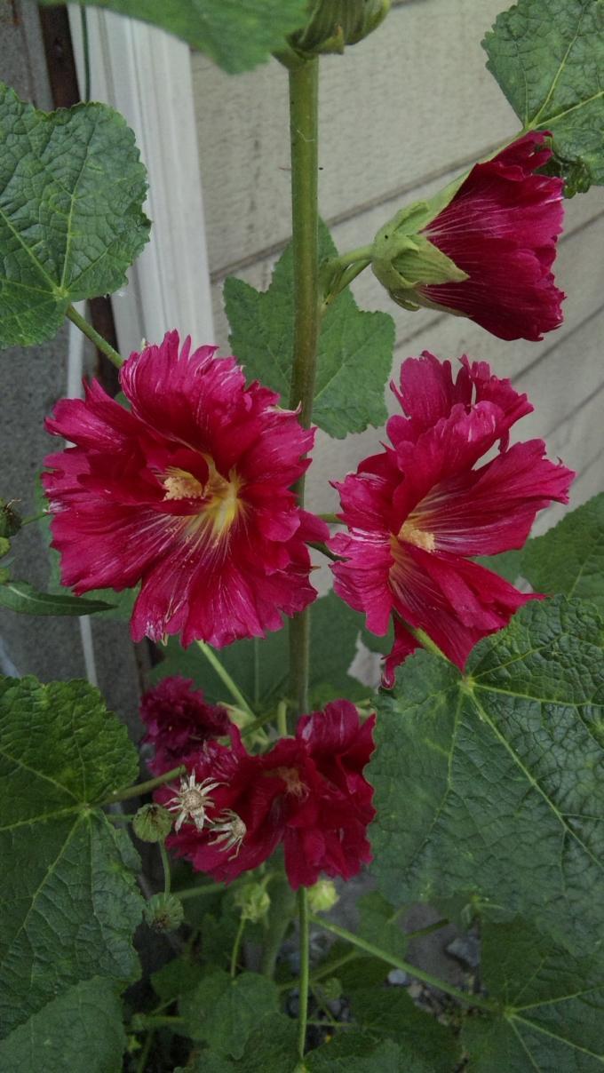 FLOWER_20130605