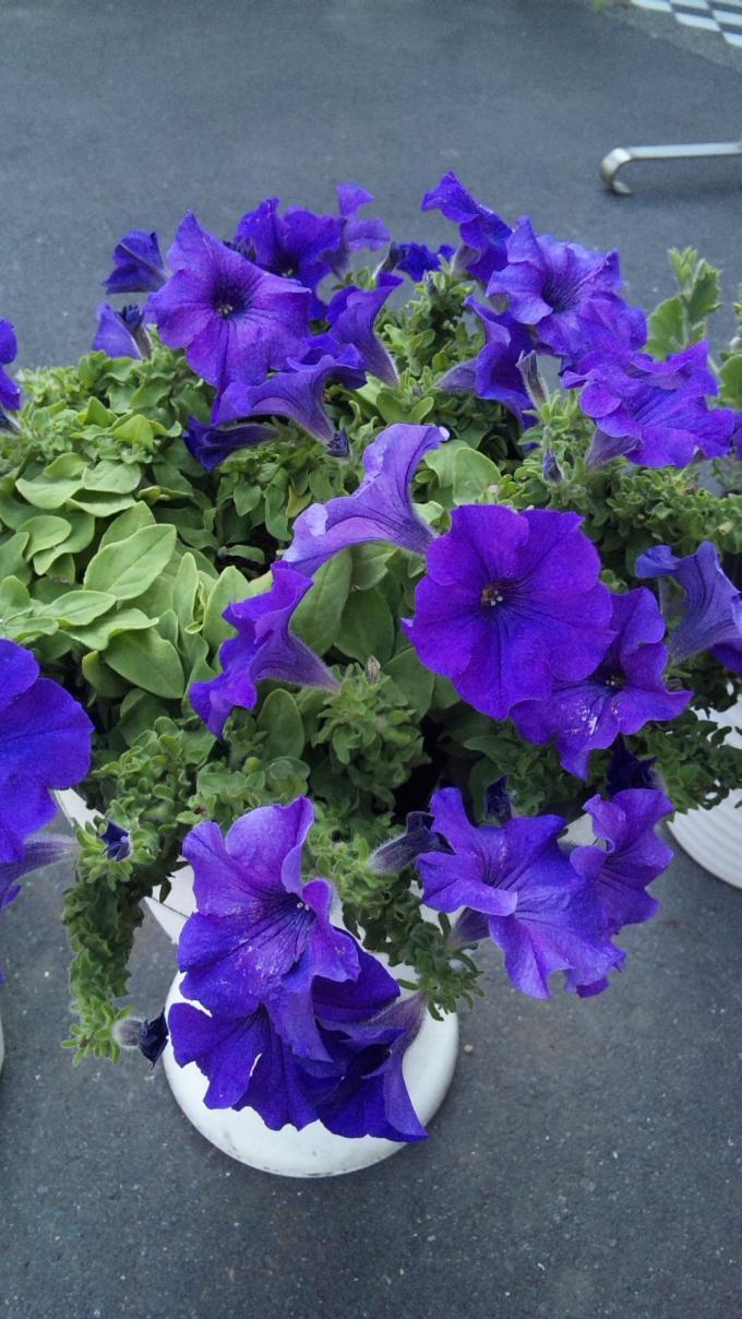 FLOWER_20130610