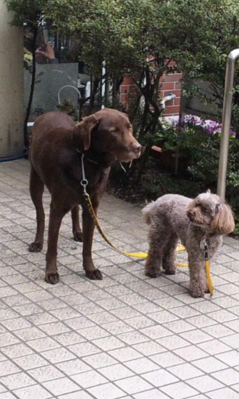大きな犬と小さな犬_20130611