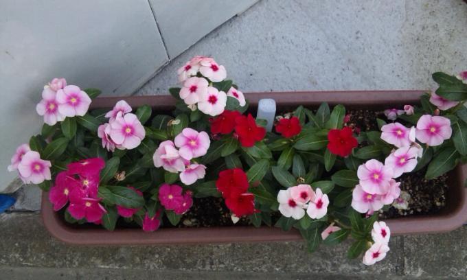 FLOWER_20130611