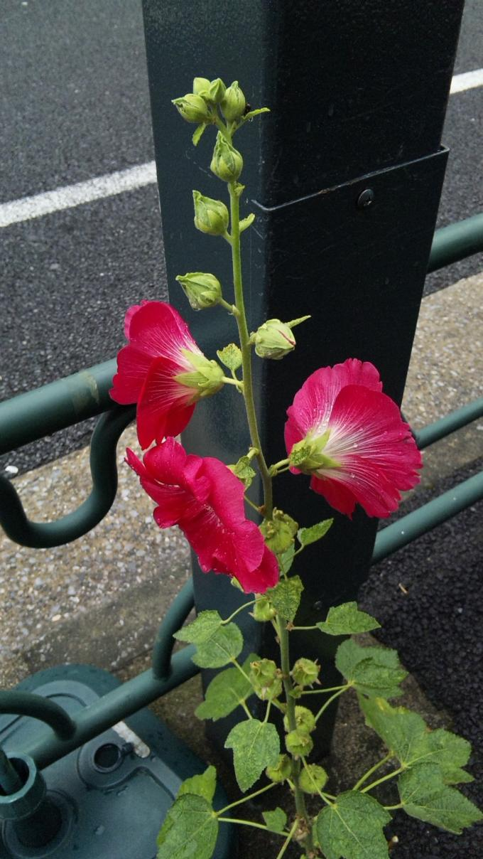 FLOWER_20130613