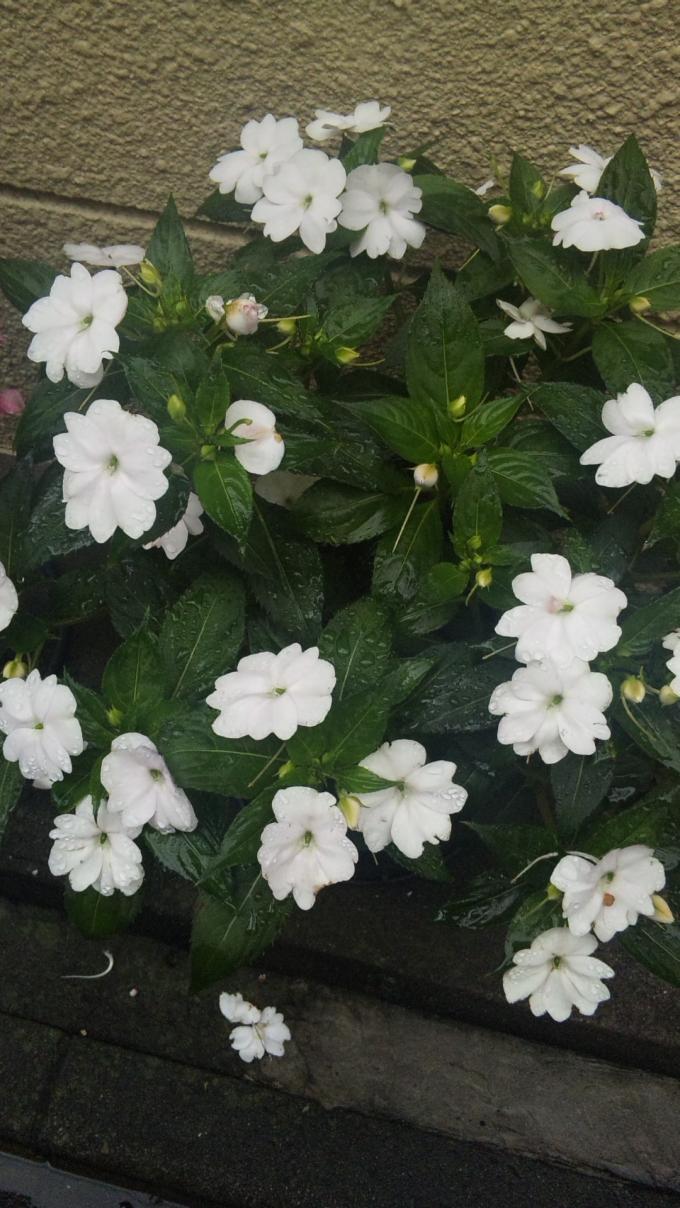 FLOWER_20130614