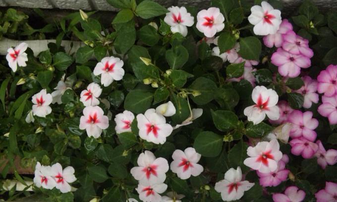 FLOWER_20130617