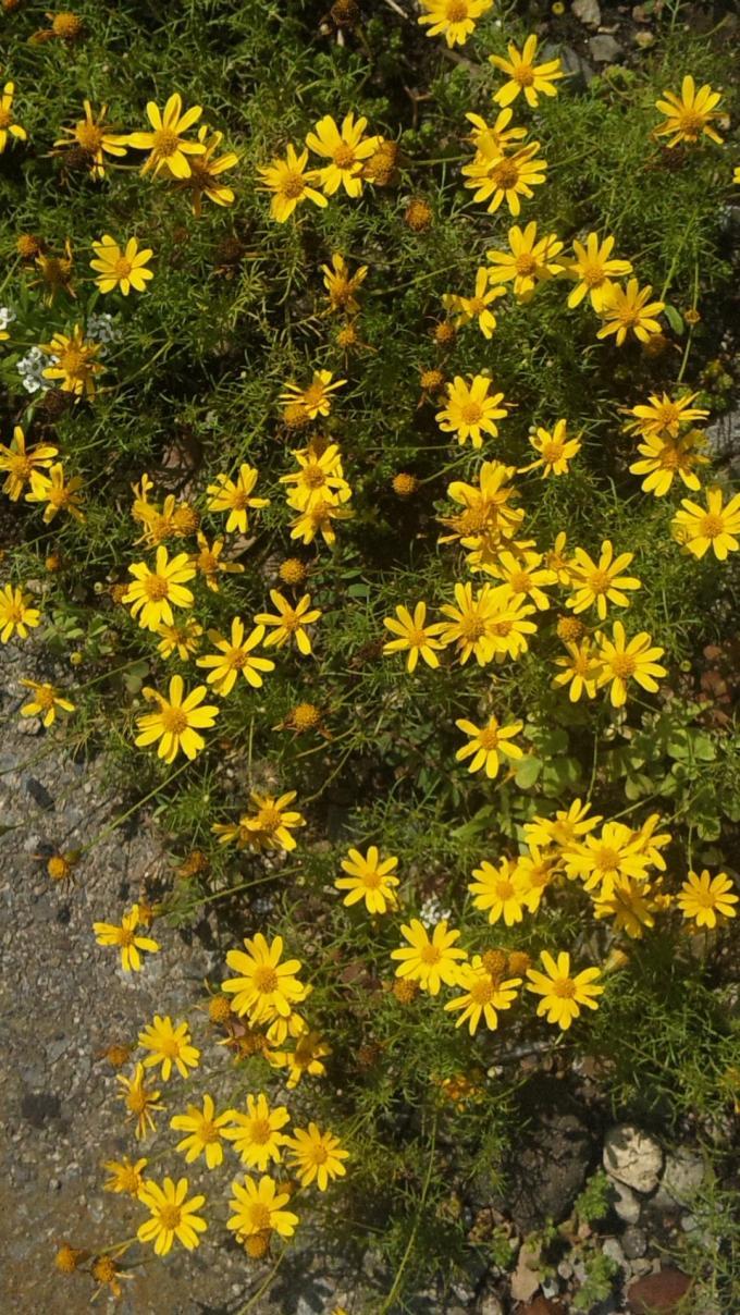 FLOWER_20130618