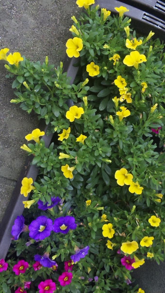 FLOWER_20130619