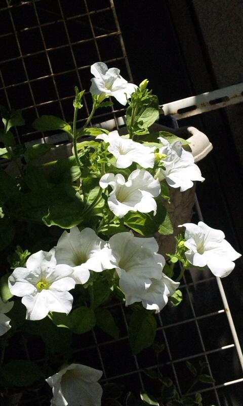 FLOWER_20130627
