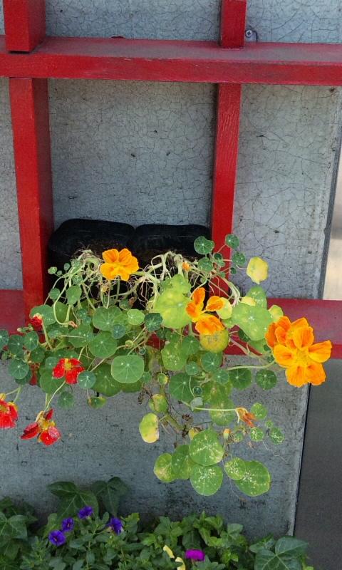 FLOWER_20130628