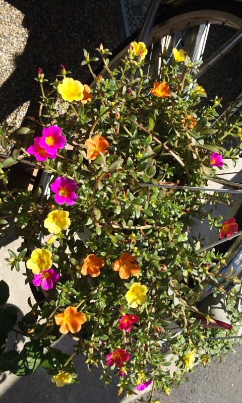 FLOWER_20130629