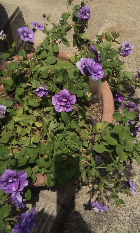 FLOWER_20130702