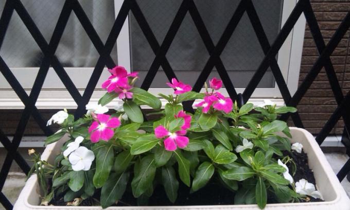 FLOWER_20130704