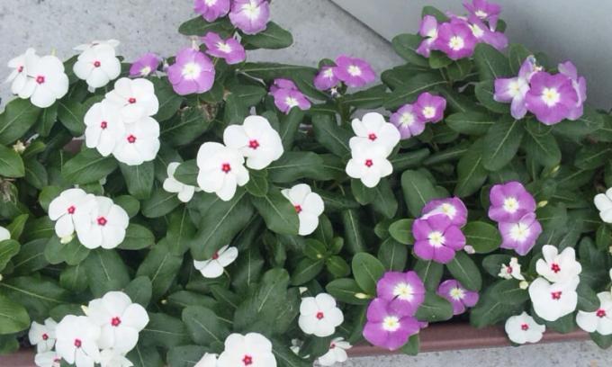 FLOWER_20130712