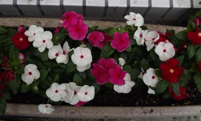 FLOWER_20130719
