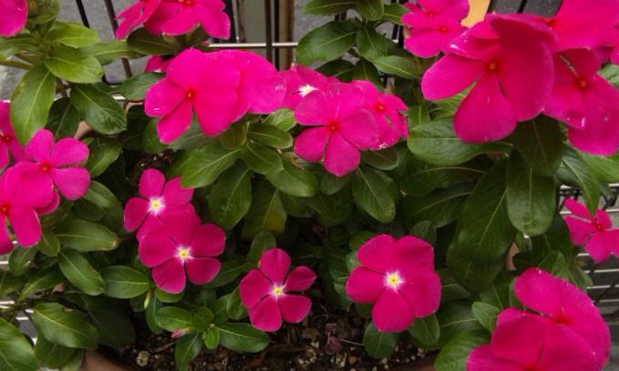 FLOWER_20130720