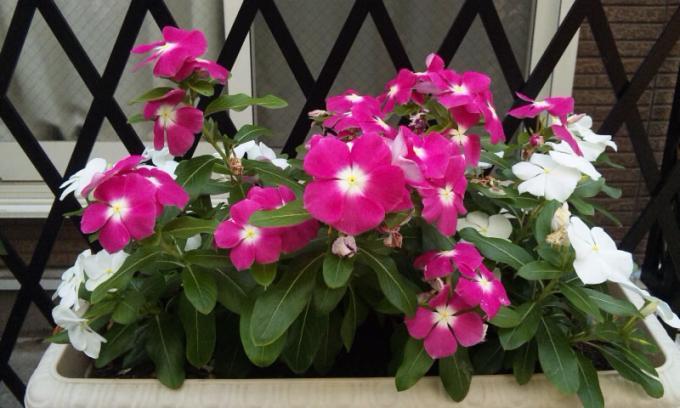 FLOWER_20130722