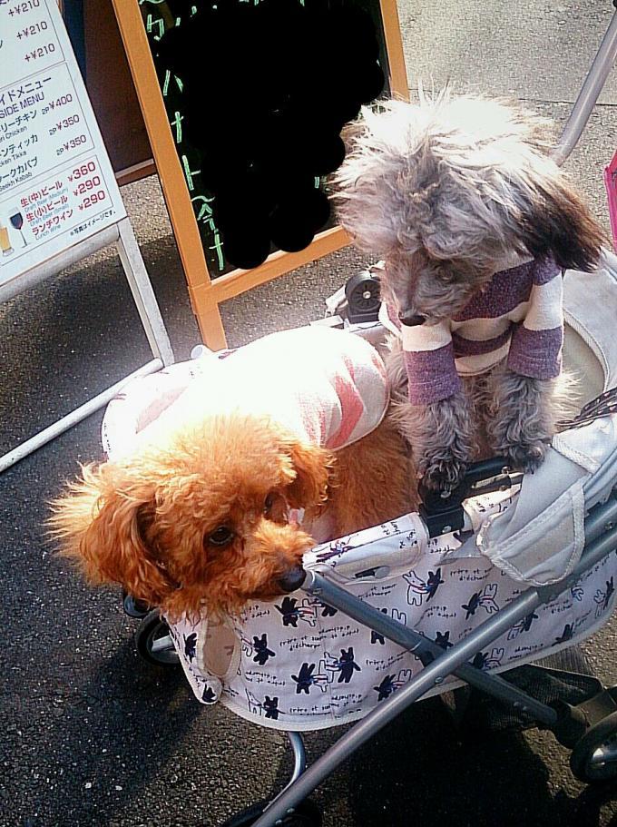 ソフィア&ルビー_20141224