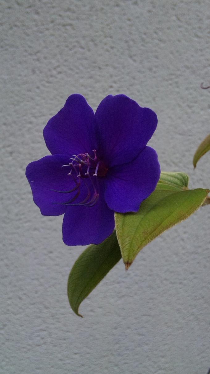 Flower_20111021