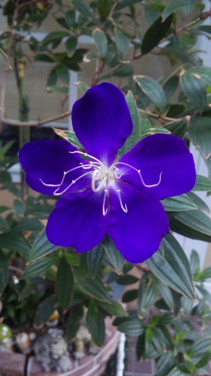 Flower_20111025