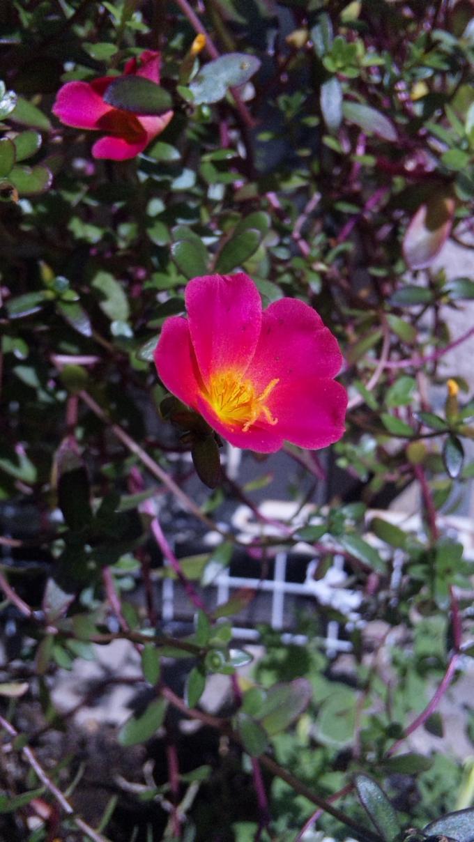 Flower_20111006